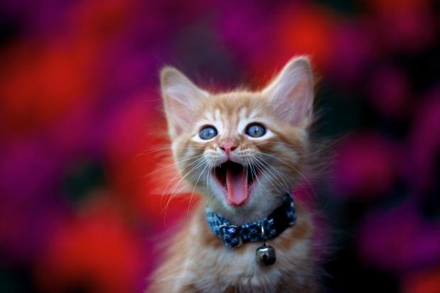 happy-cat-15465