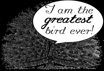 peacock_terms-768x524