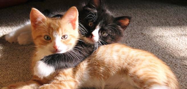 cat-care_urine-marking_main-image