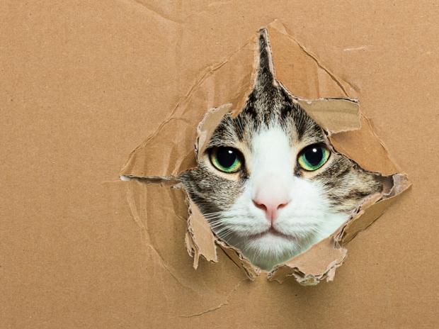 Adorable kitten poking her head through a cardboard box