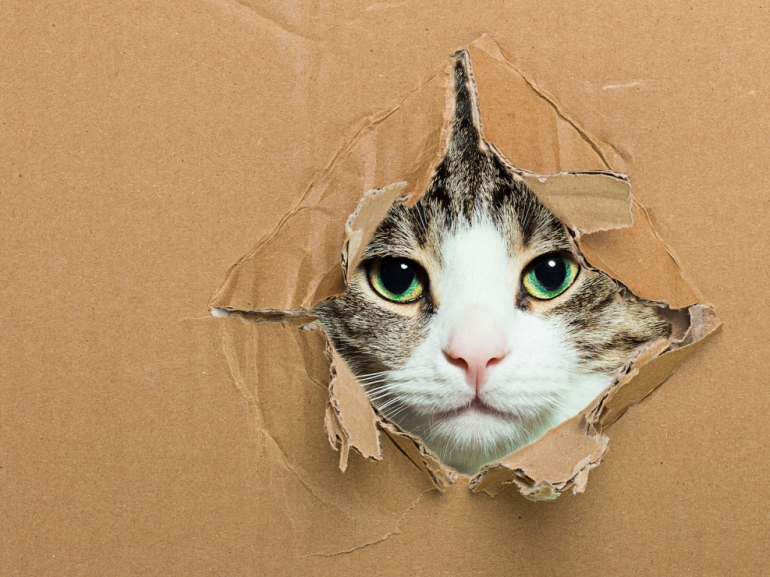 Adorable kitten poking her head through a cardboard box